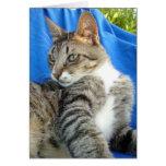 Gato de Tabby contra fondo azul del paño Tarjeta