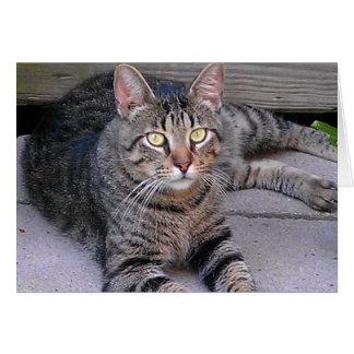 Gato de Tabby de Brown Tarjeta De Felicitación
