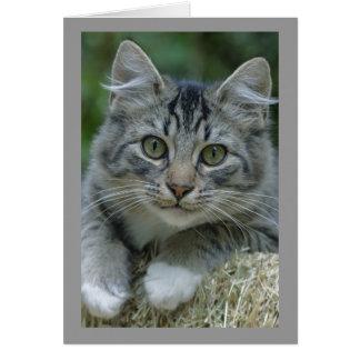 Gato de Tabby de ojos verdes con las patas blancas Tarjeta De Felicitación