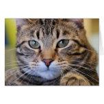 Gato de Tabby de ojos verdes serio Tarjeta De Felicitación