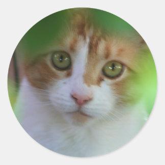 Gato de Tabby de Otange Etiquetas Redondas