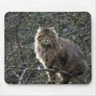 Gato de Tabby de pelo largo Mousepad Tapetes De Ratón