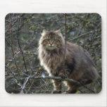 Gato de Tabby de pelo largo Mousepad Alfombrilla De Ratones