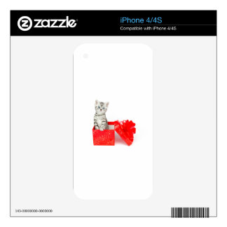 Gato de tabby de plata joven que se coloca en caja skins para iPhone 4S
