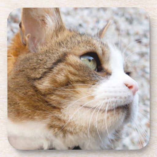 Gato de Tabby del jengibre que presenta la fotogra Posavasos