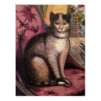 Gato de Tabby del mascota con la postal de Blue Ri