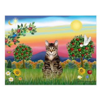 Gato de Tabby del tigre 1 - país brillante Postal