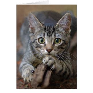 Gato de Tabby en alarma Tarjeta De Felicitación