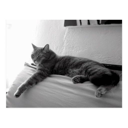 Gato de Tabby gordo Postal