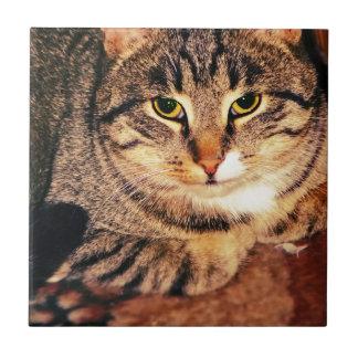 Gato de Tabby grande 6 Azulejo Cuadrado Pequeño