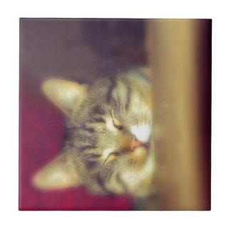 Gato de Tabby grande 7 Azulejo Cuadrado Pequeño