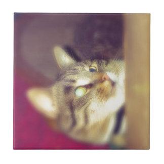 Gato de Tabby grande 8 Azulejo Cuadrado Pequeño