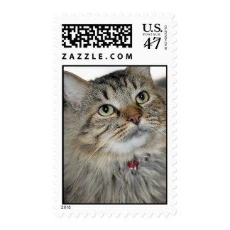 Gato de Tabby gris/gris de pelo largo americano Estampillas