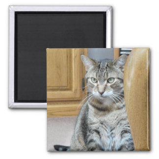 Gato de Tabby Imán Para Frigorífico