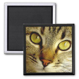 Gato de Tabby - imán