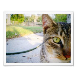 """Gato de Tabby innomado de la foto """"boda """""""