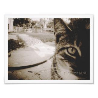 """Gato de Tabby innomado de la foto """"Italiano """""""