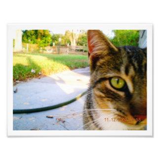"""Gato de Tabby innomado de la foto """"Lolo """""""