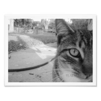 """Gato de Tabby innomado de la foto """"mono """""""