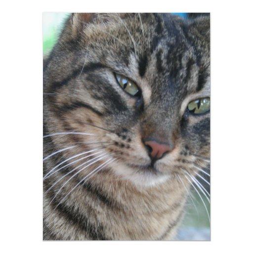 Gato de Tabby inquisitivo con los ojos verdes Invitacion Personalizada