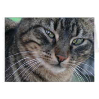 Gato de Tabby inquisitivo con los ojos verdes Tarjeta De Felicitación