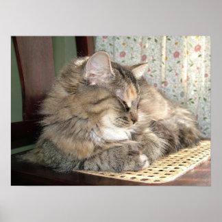 Gato de Tabby Napping Póster