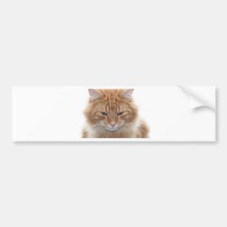 Gato de Tabby pelado naranja Pegatina Para Auto
