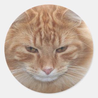 Gato de Tabby pelado naranja Pegatina Redonda