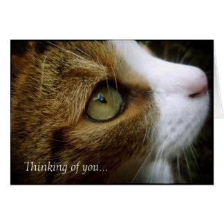 Gato de Tabby - pensando en usted carde Felicitaciones