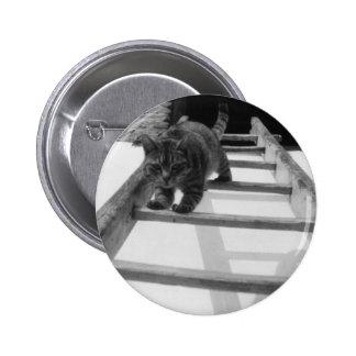 Gato de Tabby Pin
