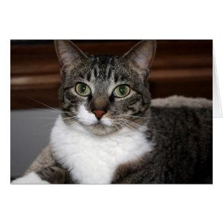 Gato de Tabby que le mira En blanco-Dentro de Tarjeta De Felicitación