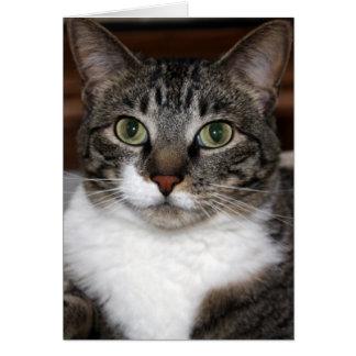 Gato de Tabby que le mira foto En blanco-Dentro de Tarjeta Pequeña