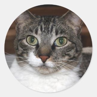 Gato de Tabby que le mira foto Pegatina Redonda