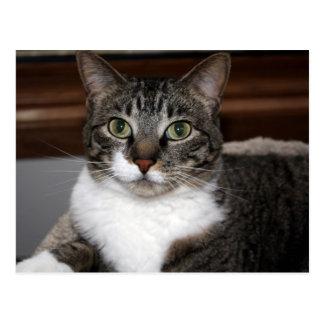 Gato de Tabby que le mira postal