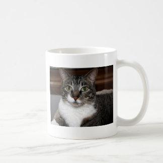 Gato de Tabby que le mira Taza Básica Blanca