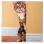 Gato de Tabby que mira a escondidas alrededor de l Azulejo Cuadrado Grande