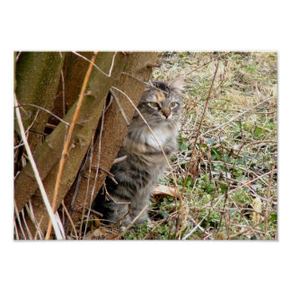 Gato de Tabby que oculta detrás de árbol Posters
