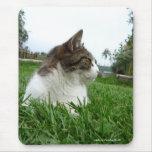 Gato de Tabby que se relaja en la hierba Mousepad Alfombrilla De Raton