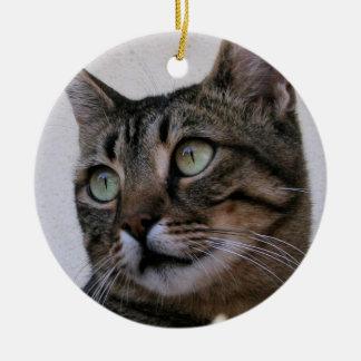 Gato de Tabby que se sienta en la sombra detrás de Ornamente De Reyes