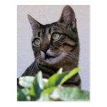 Gato de Tabby que se sienta en la sombra detrás de Postal