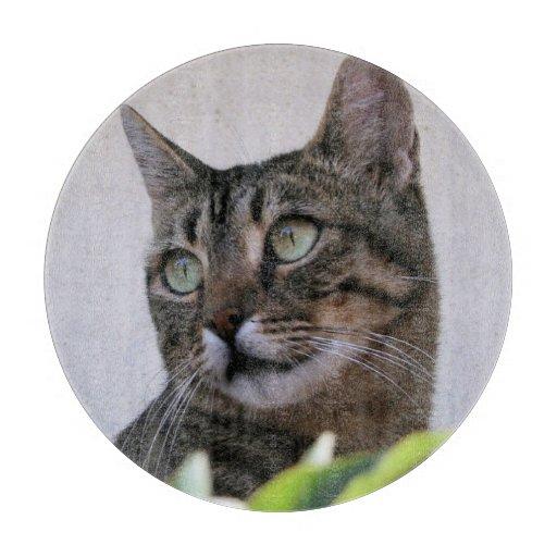 Gato de Tabby que se sienta en la sombra Tablas Para Cortar