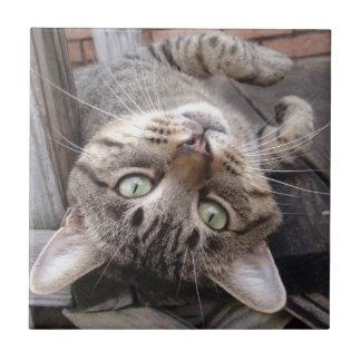 Gato de Tabby salvaje rayado juguetón Azulejo Ceramica