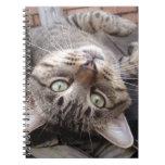 Gato de Tabby salvaje rayado juguetón Libro De Apuntes