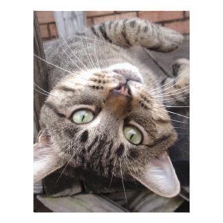 Gato de Tabby salvaje rayado juguetón Plantilla De Membrete