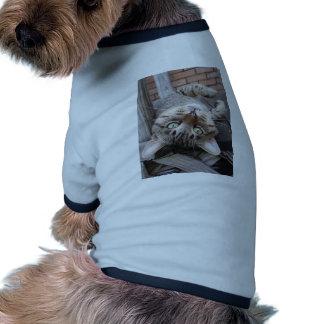 Gato de Tabby salvaje rayado juguetón Camisas De Mascota