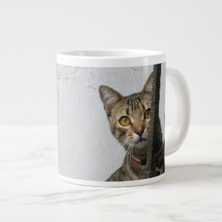 Gato de Tabby Taza Grande