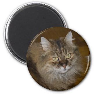 Gato del angora de Brown Imán Redondo 5 Cm