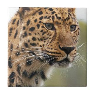 Gato del animal salvaje tejas  cerámicas