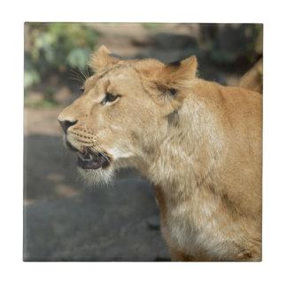 Gato del animal salvaje del león tejas