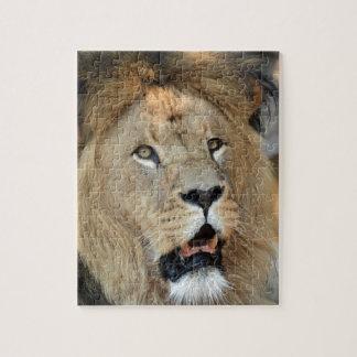 Gato del animal salvaje del león rompecabeza